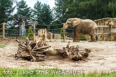 ZOO Safari - Dvur Kralove